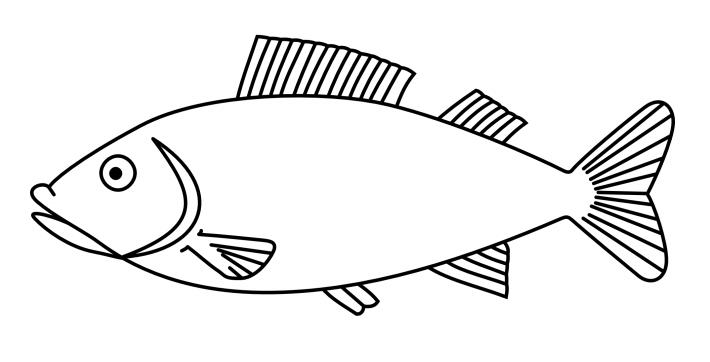 40 malvorlage fisch a4 malvorlage fisch a4 in 2020
