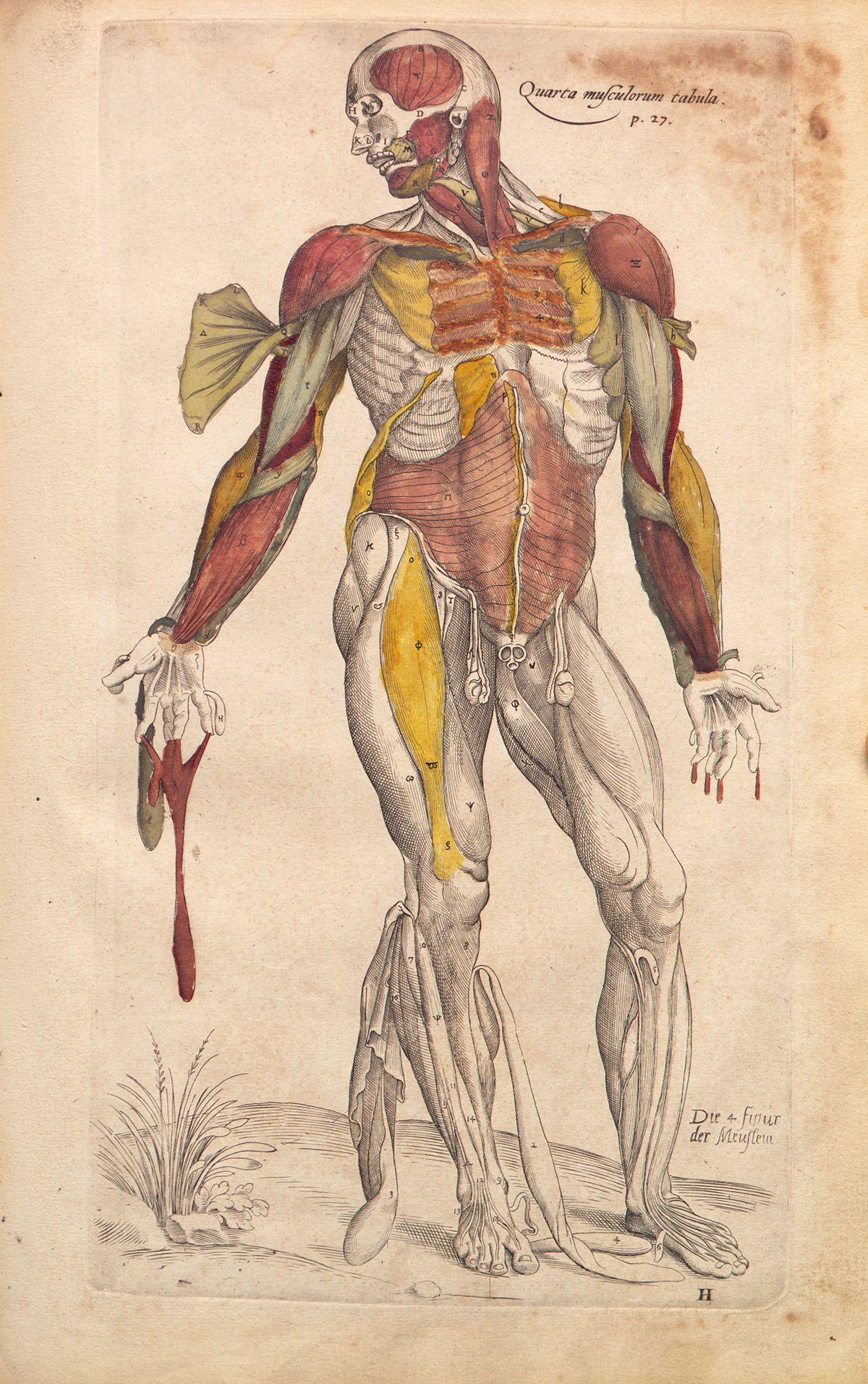 De Humani Corporis Fabrica Andreas Vesalius 1543 Anatomy