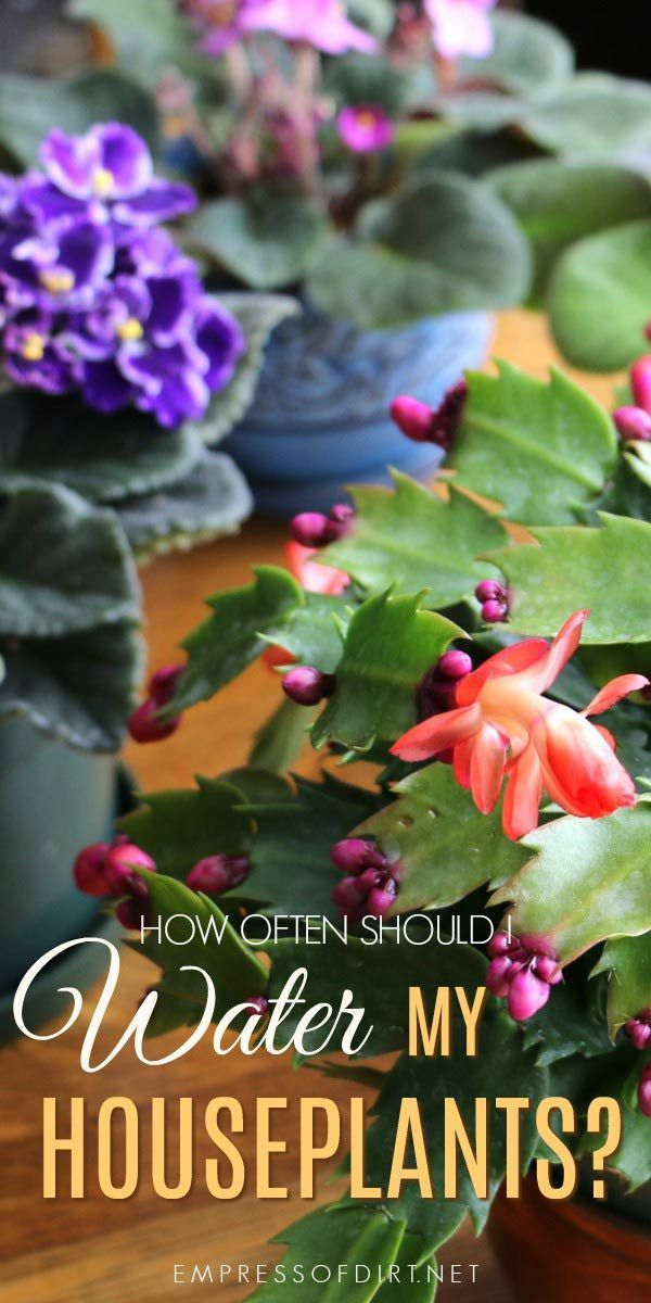 How often should i water my houseplants beginner - How often to water vegetable garden ...