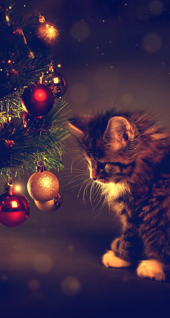 To Taki Czas Dla Nas Zyczymy Wam Aby Dla Was Byl Blogoslawiony Mid Grzelak Kitten Wallpaper Kittens Cutest Christmas Cats
