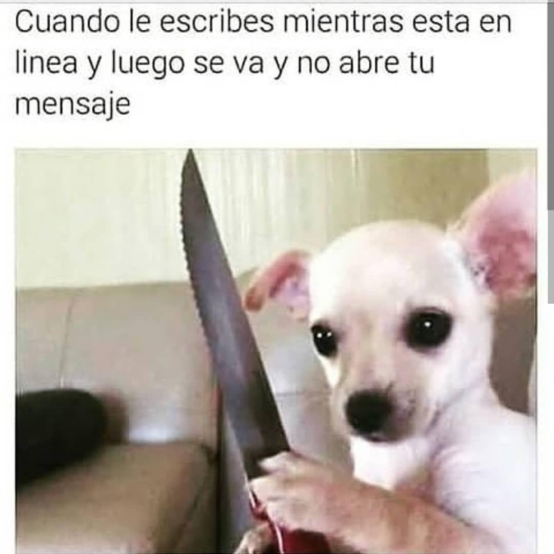 100 Real Haaha Menciona A Tus Amigos Pto Dixlesico Ignora Los Hashta Memes De Animales Divertidos Memes De Perros Chistosos Memes Graciosos De Animales