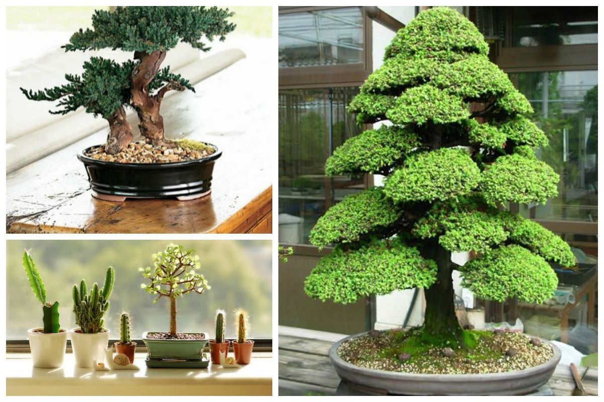 Perfect tips for bonsai care, from beginners to experts