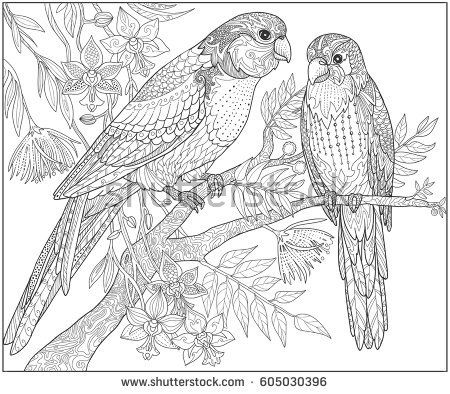 Two Parrots Sit On A Branch In The Jungle Adult Coloring Book Page Doodle Tropical Birds Vector Illustration