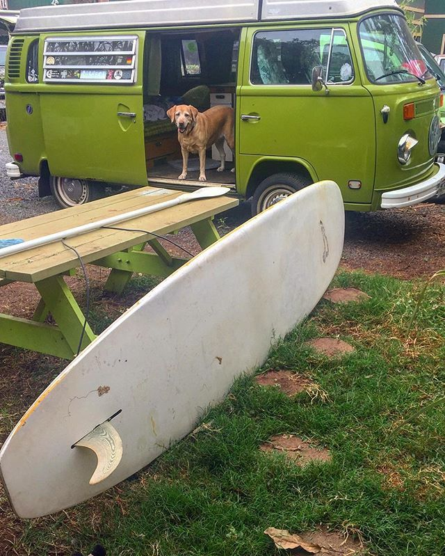 Liked on InstaGram: Someday mom will get a nice board and you can have old Betty, Kona! 🐾 #SUP #supdog #vwgirl #vw #volkswagen #aircooled #westy #westfalia #dowhatyoulove #vwdog #adventure #808 #luckywelivemaui #mauigirl #vwlife