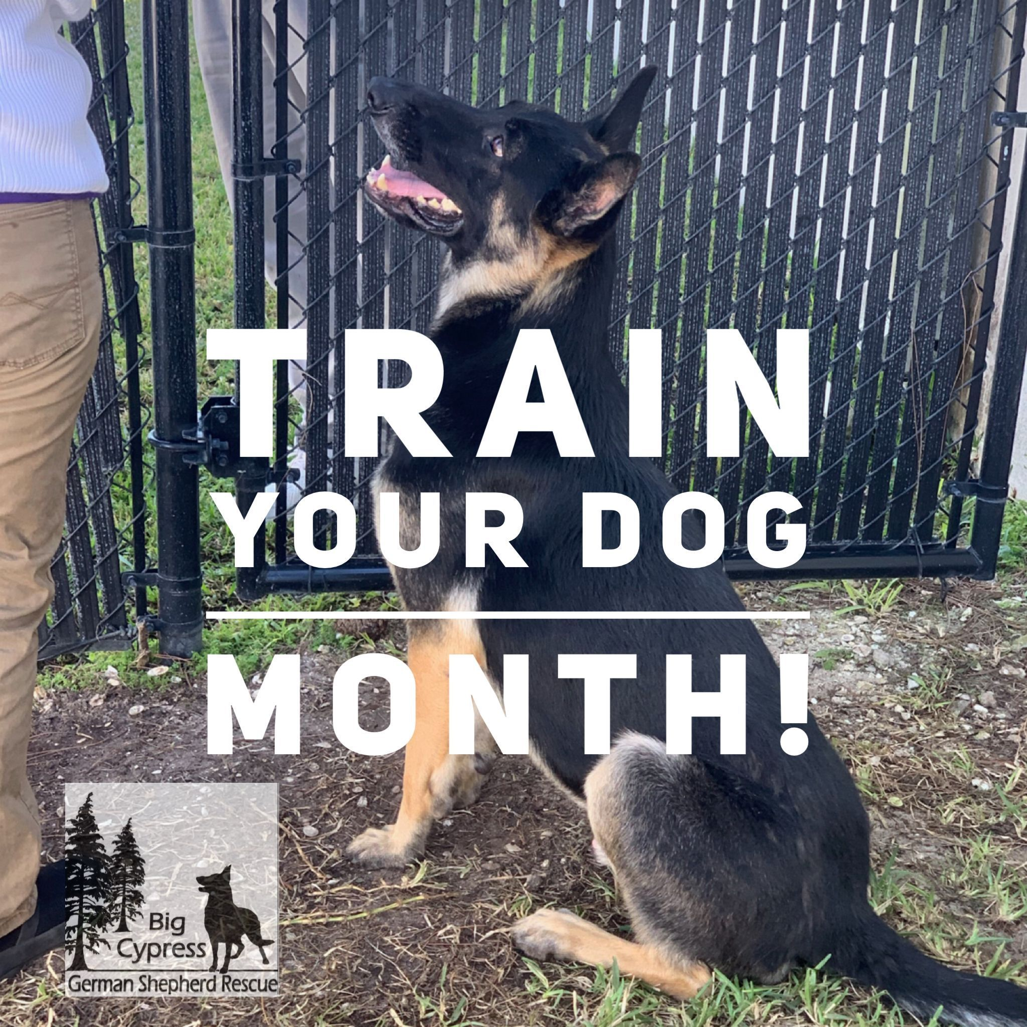 3 Ways To Take Advantage Of National Train Your Dog Month This