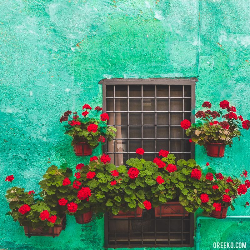 Green and Red Wall and Flowers by oreeko.com