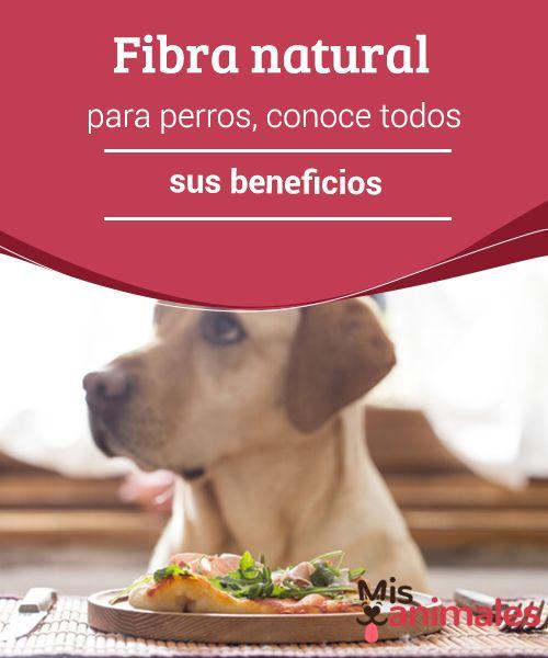Fibra Natural Para Perros Conoce Todos Sus Beneficios Con