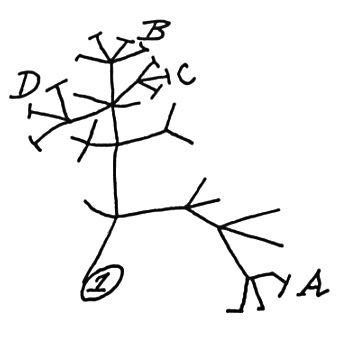 Darwin's evolutionary theory tree of life sketch of 1837