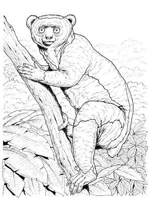Ausmalbild Koboldmaki Affe Zum Kostenlosen Ausdrucken Und Ausmalen Ausmalbilder Ausmalbilderaffe Malvorlagen Ausmalen Ausmalbilder Tiere Ausmalbild