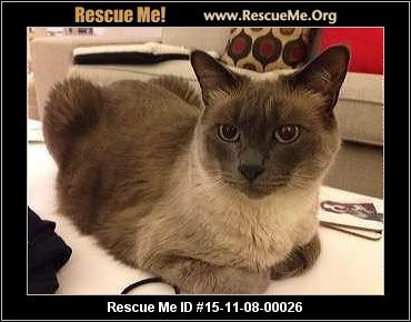 """""""Click here to view Cats for adoption, or post one in need."""" ― ♥ RESCUE ME! ♥ ۬"""