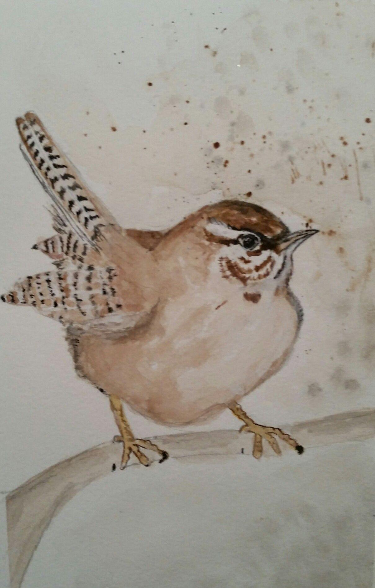Watercolor Wren Painting By Brenda Sauve Bird Drawings Birds Painting Watercolor Bird
