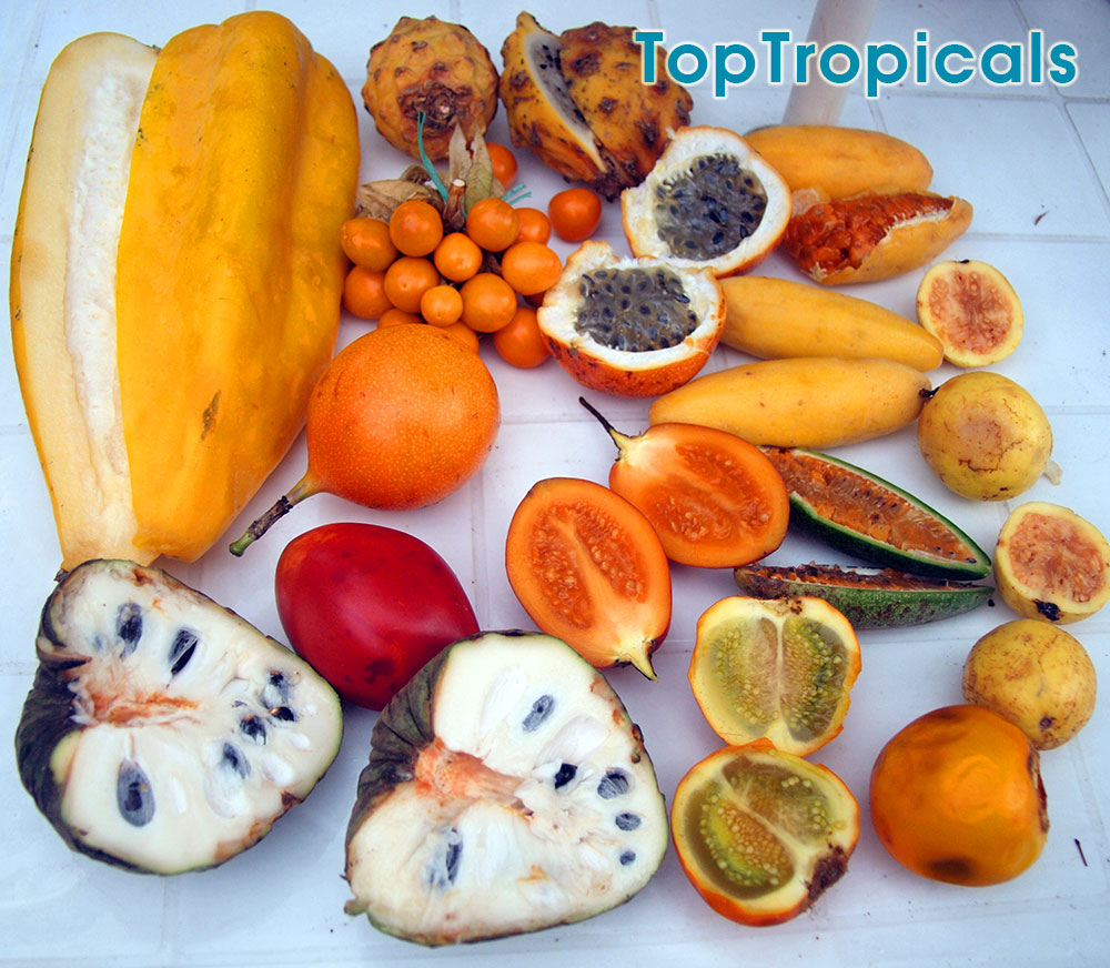 When To Fertilize And Prune Tropical Fruit Trees Q Can Tropical Fruit Trees Soursop Mango Star Fruit Etc Fruit Plants Fast Growing Shade Trees Plant Food