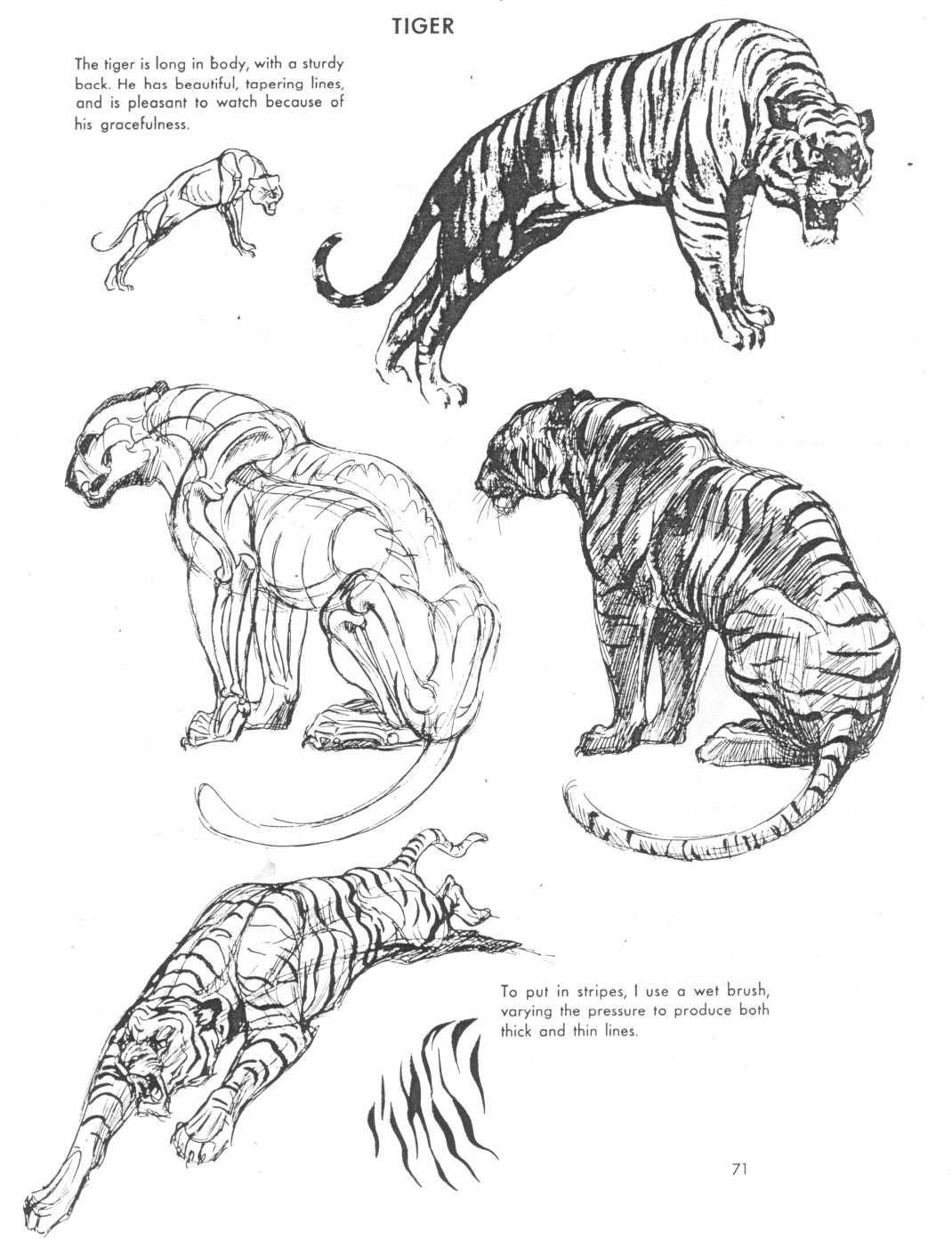 Art Of Animal Drawing