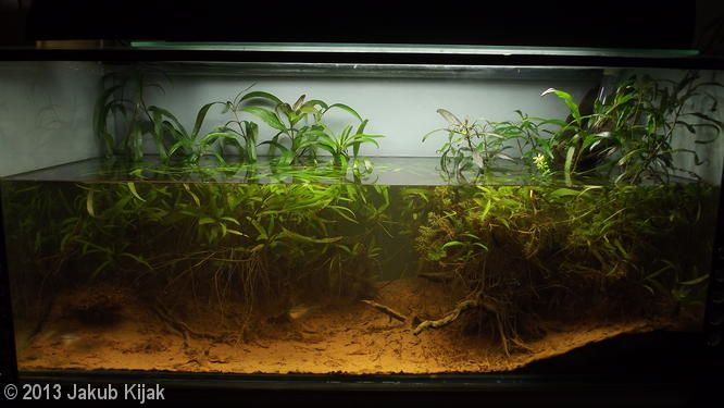202L Biotope Aquascape: Still waters of Malaysia ...