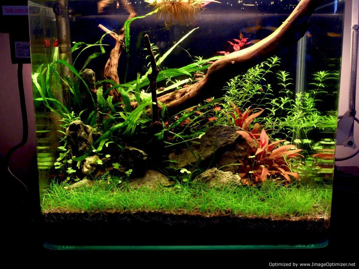 Xz S 3ft High Tech Low Tech Nano Experiments The Planted Tank Forum Low Tech Aquascape Planted Aquarium