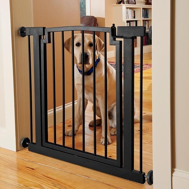 Wide+Metal+Dog+Gate+-+Wrought-Iron+Door+Frame+Gate+--+Orvis on ...