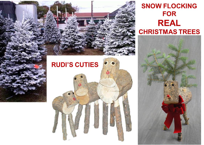 Dural Christmas Tree Farm Delivers Real Christmas Trees To Your Door And When It S All Over Real Christmas Tree Australian Christmas Tree Christmas Tree Farm