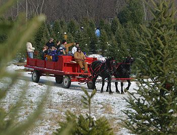 Horse Drawn And Tractor Drawn Hayrides To Pick Your Own Christmas Trees At  Big Tree Plantation, Morrow, Ohio, NE Of Cincinnati