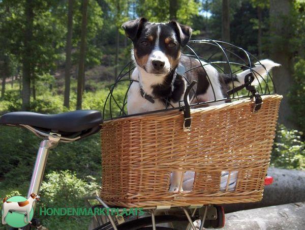 Fietsmand hond | Hondenmand fiets: Hondenmanden voor op de fiets - of achterop de fiets