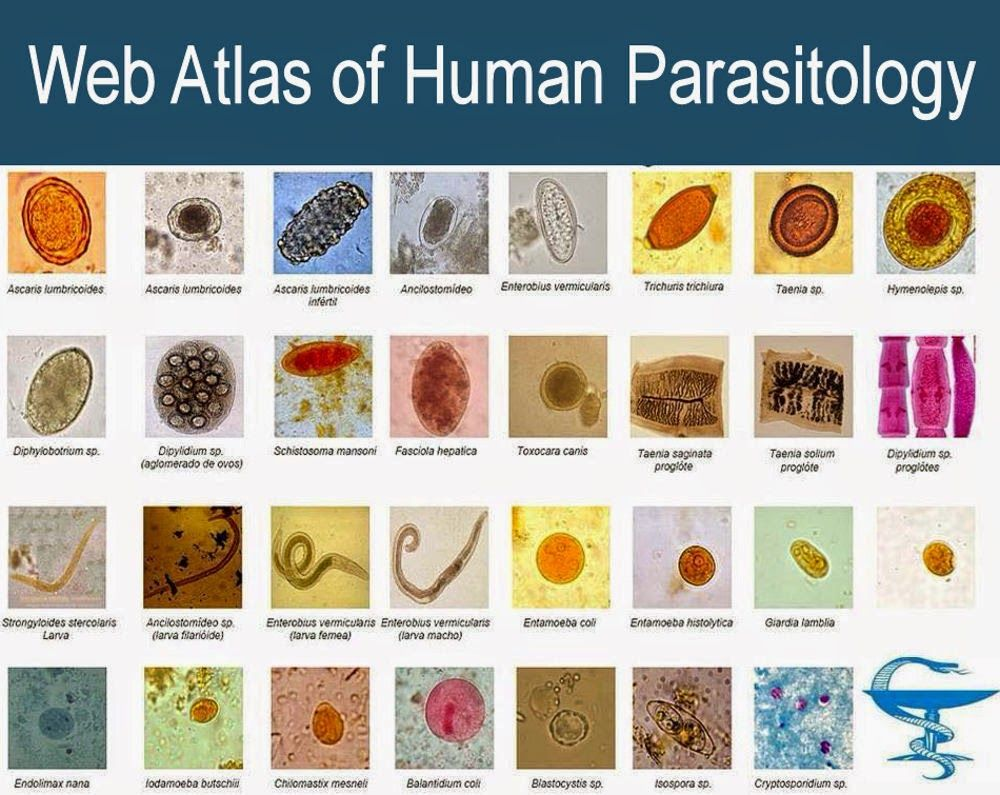 Web Atlas of Medical Parasitology aims to provide