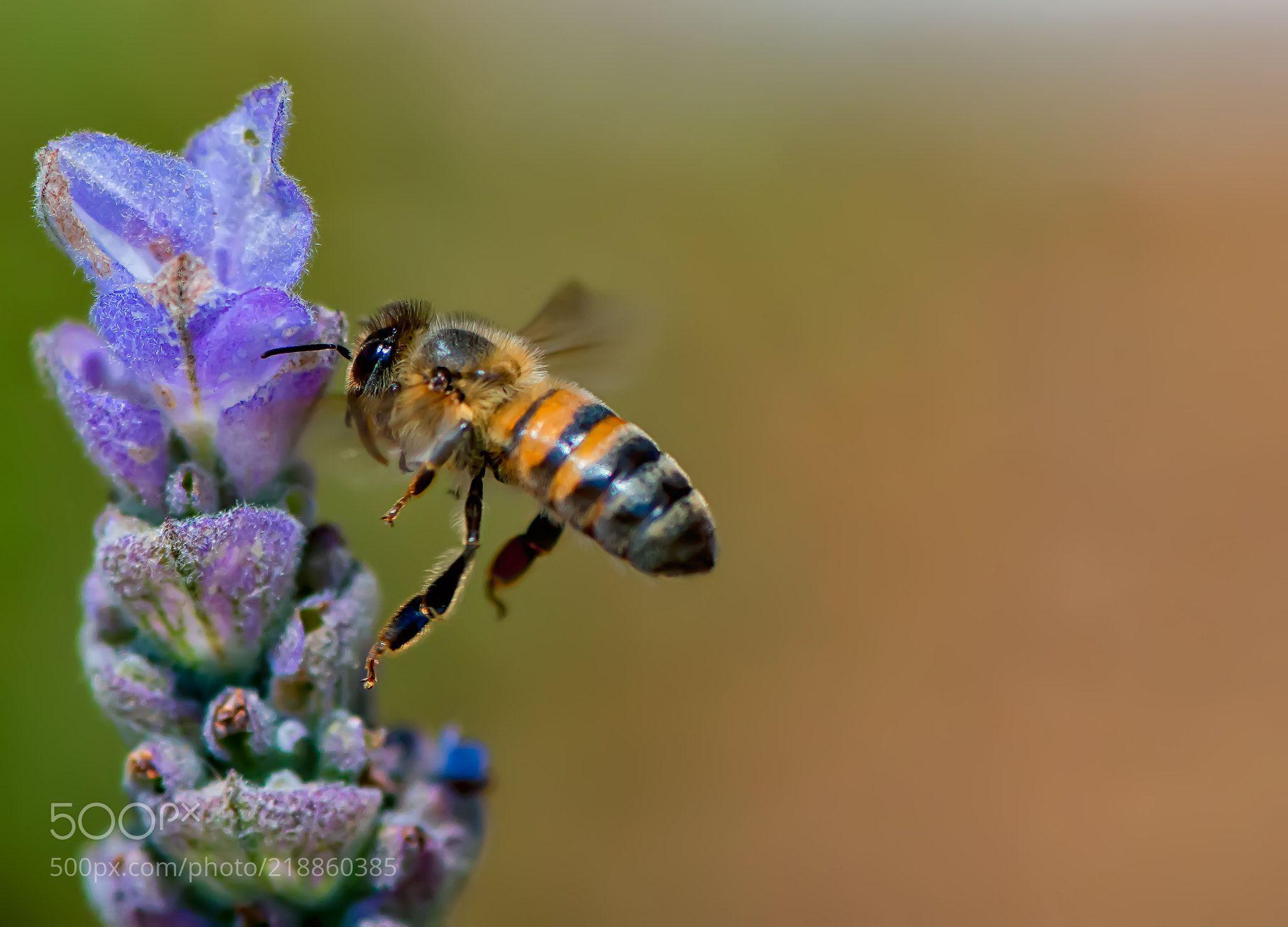 incomming (patrick strock / menifee / riverside) #nikon D800E #macro #photo #insect #nature