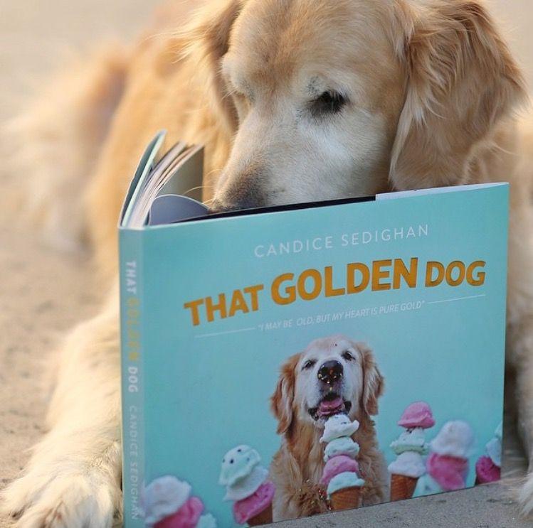 The Golden Dog Book Follow Them On Instagram Dogs Golden