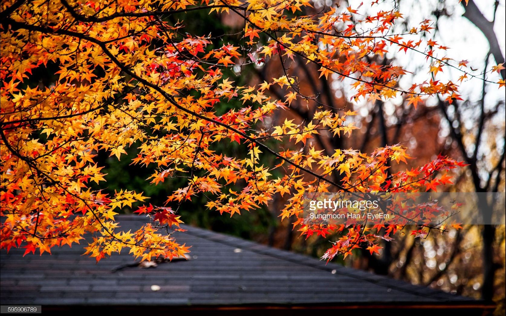 Yangjae Citizen's Forest, Seoul, South Korea (Photo by eyepurifier, Alex SM Han)  http://www.gettyimages.com/search/2/image?phrase=Sungmoon&family=creative  #양재 #시민의숲 #가을 #단풍 #서울 #landscape #Gettyimages #autumn #foliage #fallenleaves #fall #season #Seoul #southkorea #autumncolors #tranquility #calm #park #forest #brown #silent #yellow #red #sky #twig #tree #maple #mapleleaf