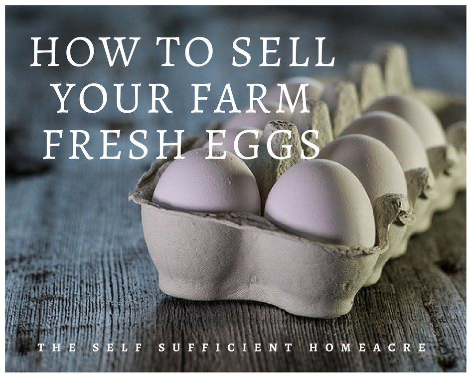 How To Sell Your Farm Fresh Eggs Check Regulations And Competition Set A Price And Market Your Fresh Eggs The Self S Farm Fresh Eggs Fresh Eggs Selling Eggs