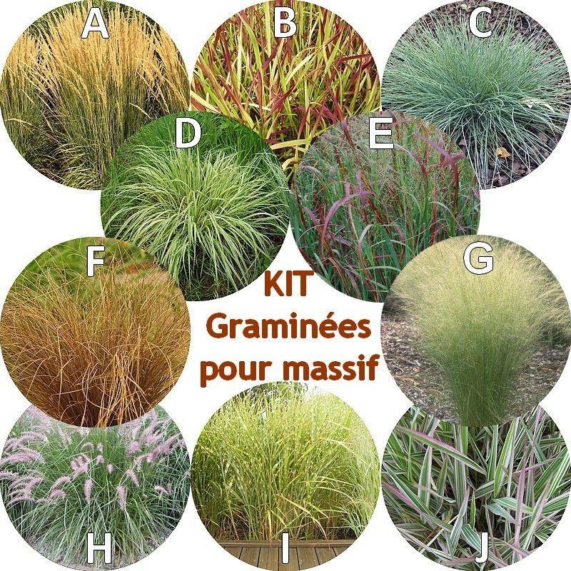 Gramin es pour massif en kit de 10 arbustes gramin es for Plantes et arbustes vivaces