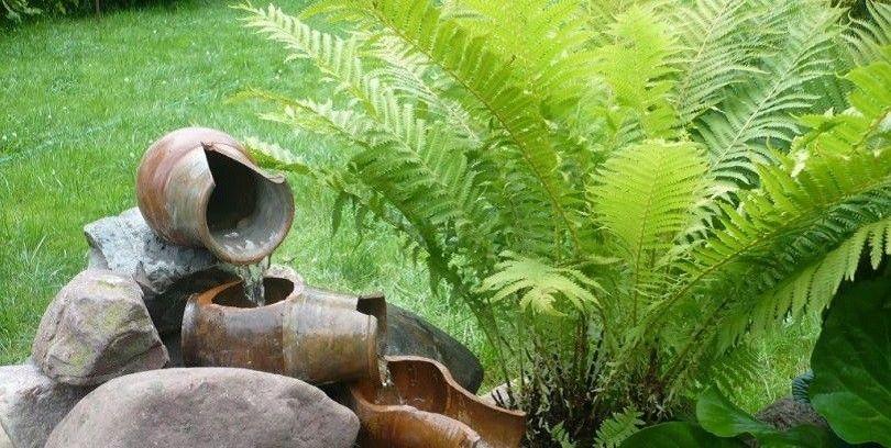 папоротник садовый фото