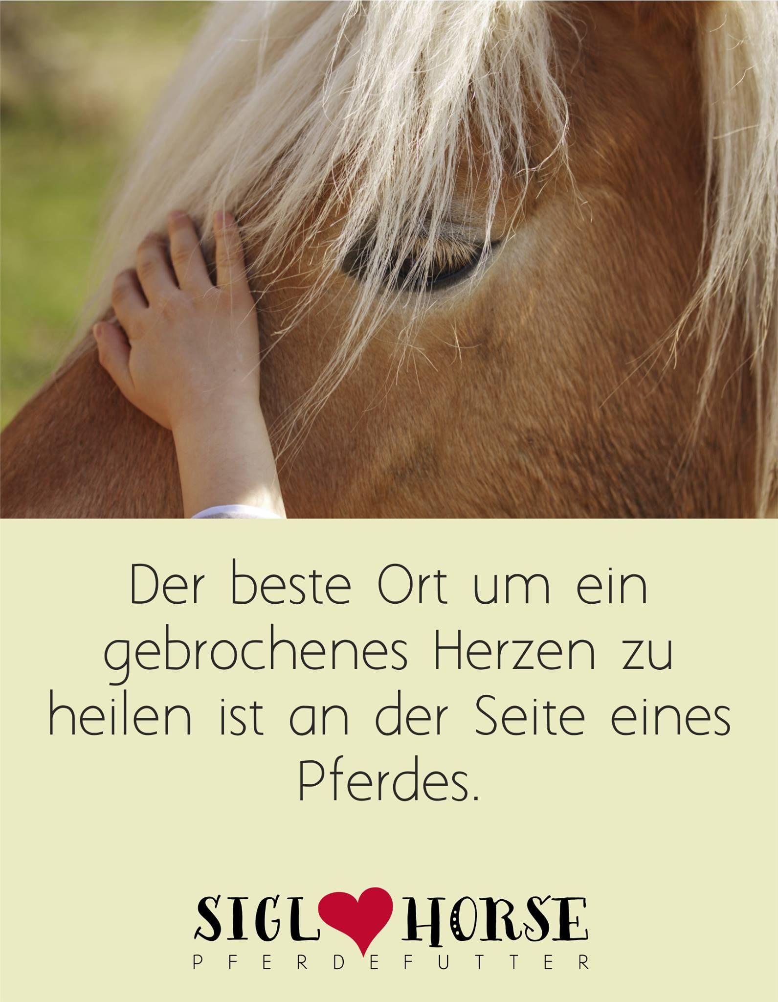 pferde heilen pferde lebensweisheiten pinterest heilen pferde und pferdespr che. Black Bedroom Furniture Sets. Home Design Ideas