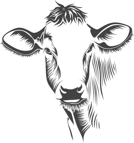 Head Cow Cattle Animal Farm Cow Cow C Cow drawing