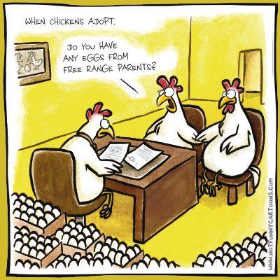 When Chickens Adopt Chicken Humor Chicken Jokes Chickens