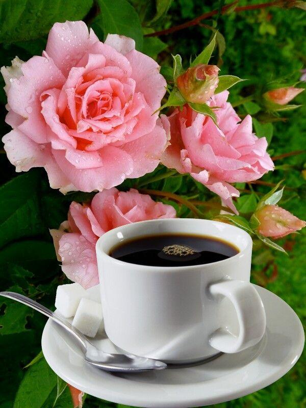 Pin By Linda Dixon Pelechatz On Quotes Good Morning Quotes Morning Quotes Good Morning Saturday