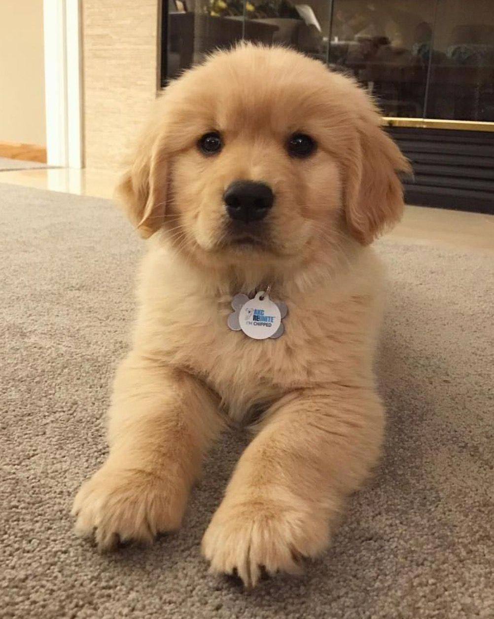 Oh I Love This Cutie Puppy Baby With Images Cute Baby