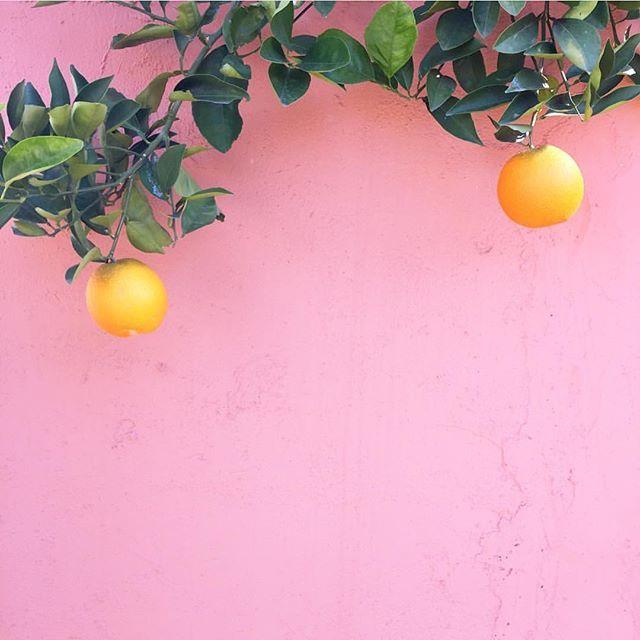 lemons pink wall