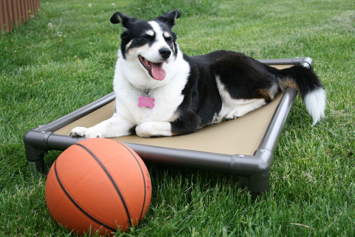 Kuranda Dog Beds & Vote!