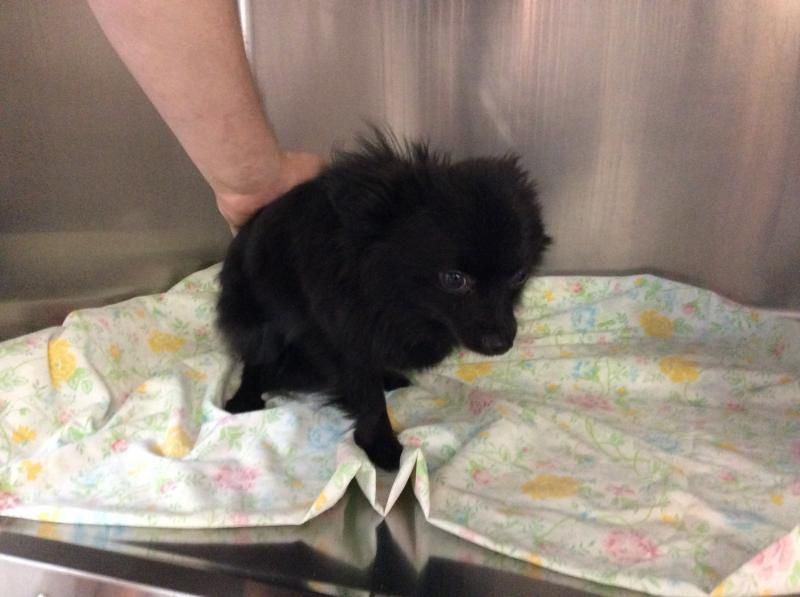 12++ Westbrook animal shelter maine ideas