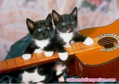 Pix For > Kittens Playing Guitar