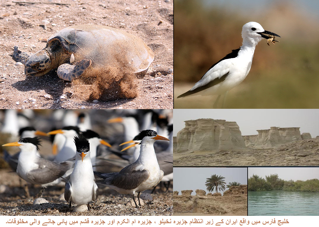 Wild Life in Iran 8 (Urdu Documentary) (With images