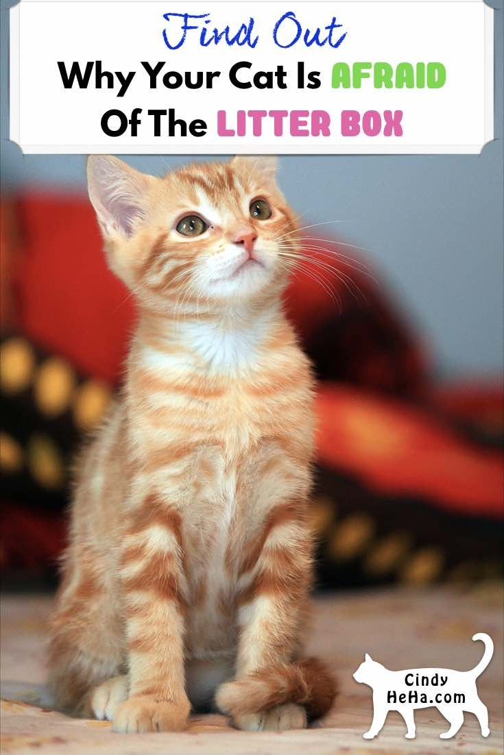 Why Is My Cat Afraid Of The Litter Box? | Cats, Cat ...