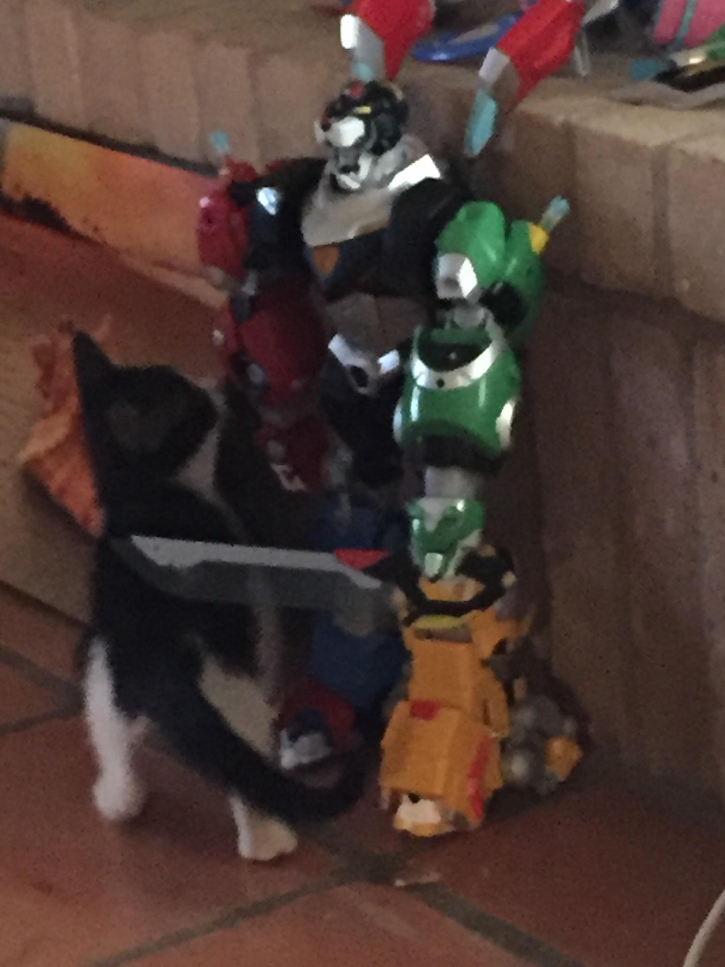 Oreo sizing up Voltron. http://ift.tt/2rt4dmn