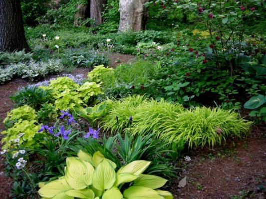 perennial garden plans zone 4 inside