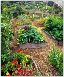 Planting in Raised Beds | Divide Raised Beds | Vegetable ...