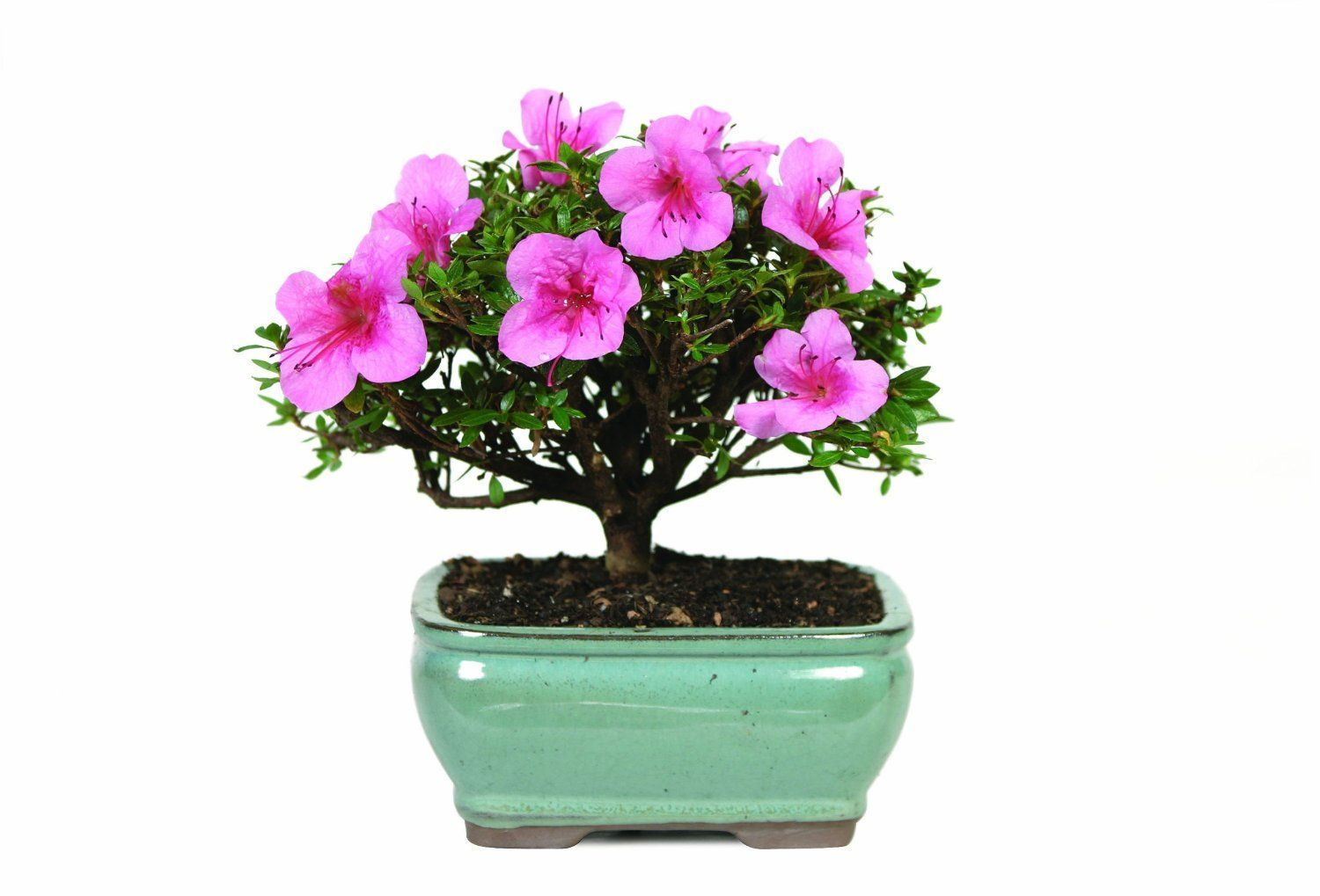Small House Plants With Flowers 20 Best Small Indoor Plants To Spruce Up Your Space Houseplant