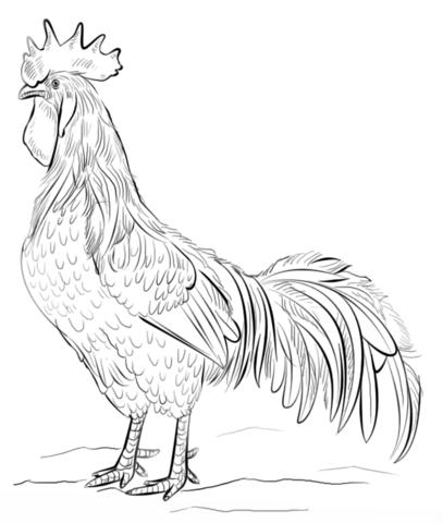 brown leghorn rooster coloring page 동물 pinterest brown