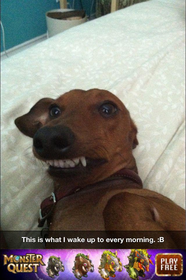 Smiling Wiener Dog Throat Is Hilarious But So Cute Wiener