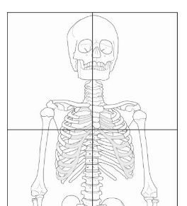 Child size skeleton printout