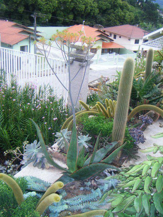 floreira de cactos em Brasil