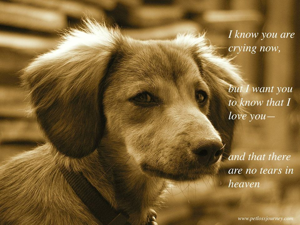 There are no tears in heaven ♥ Dog heaven, Dog grief
